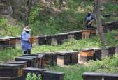 野蜂蜜和家蜂蜜怎样分别
